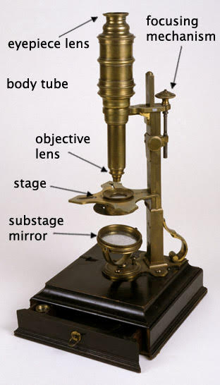 Compound microscope, labelled to show its parts