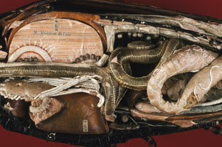 Papier-mache and plaster model of a May beetle - inside the body.