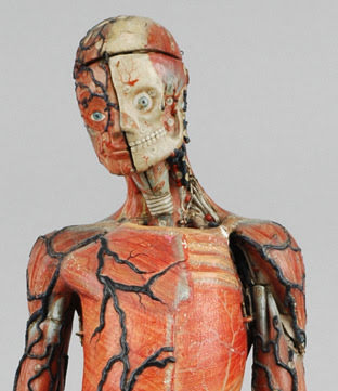 Papier-mache and plaster model of a human, showing various layers of the head and torso.