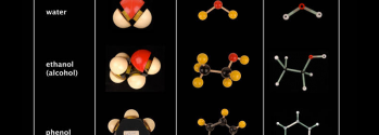 Table showing the molecular structures of water, ethanol, and phenol, using three different models: space-filling, ball and spoke, and skeletal.